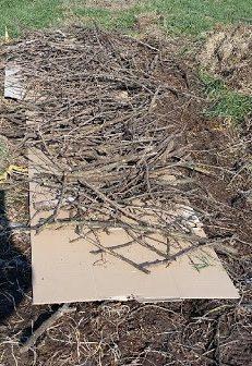 permaculture carton paille.jpg